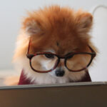Photo of a dog wearing large glasses using a computer tablet